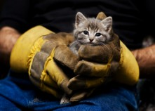 Animal Shelters in London