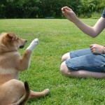 Dog Training Services in London