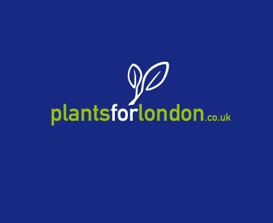 Dutchess Ltd in London