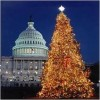 The Presidential Tree