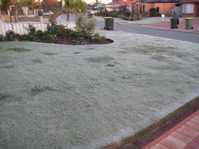 Lawn in Winter