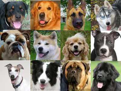 Dog Breeders in London