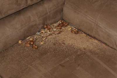 How Do You Get Rid Of Carpenter Ants In Your Yard Bed