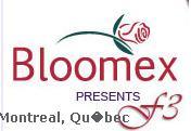 Bloomex Flowers Montreal