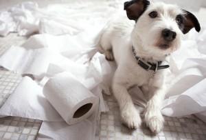 Buy a Pet Dog in London