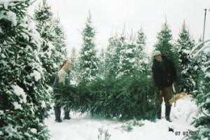 Christmas Tree Farms in Ottawa