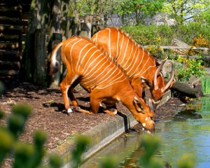 Facts about London Zoo