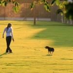 Parks in London for Dog Walk