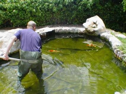 Removing Algae from Fish Pond