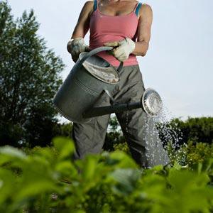Making a Natural Garden Pesticide