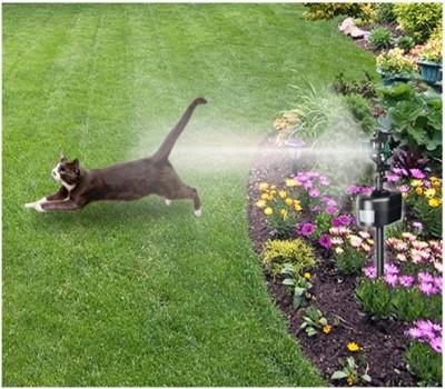 ammonia for cat urine