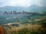 Damages of Acid Rain