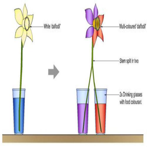 Drinking Water Plants