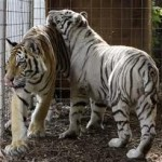 Guide about Exotic, Dangerous & Wild Animals Licence London