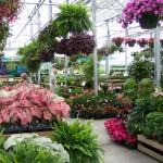 List of Garden Centers in London