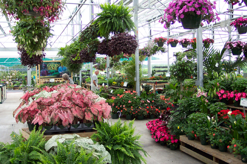 Best Garden Centers in London