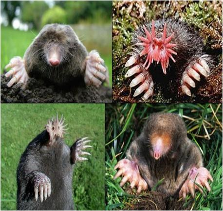 How To Get Rid Of Garden Moles