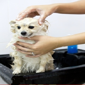 How To Get Rid Of Dog Fleas Naturally Step By Step