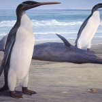 Giant Prehistoric Penguins Unveiled
