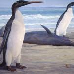 Giant Prehistoric Penguins Unveiled