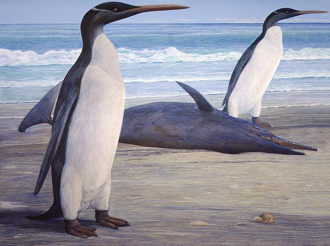 giant-penguin