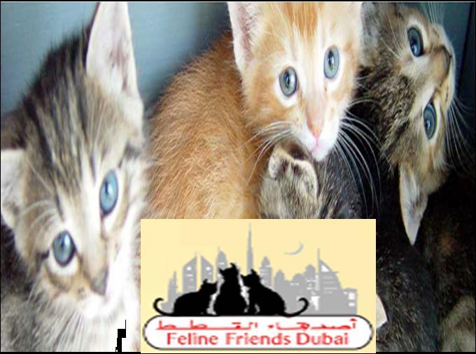 Feline Friends Dubai