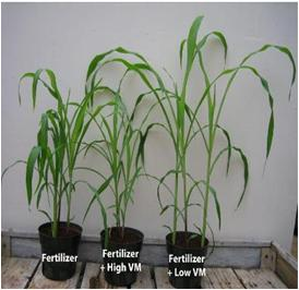 Effect of Fertilizer on Plants