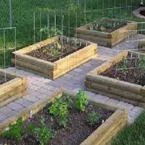 how to build raised vegetable garden boxes