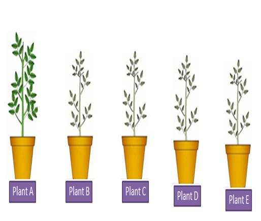 Effect of Detergent on Plant Growth