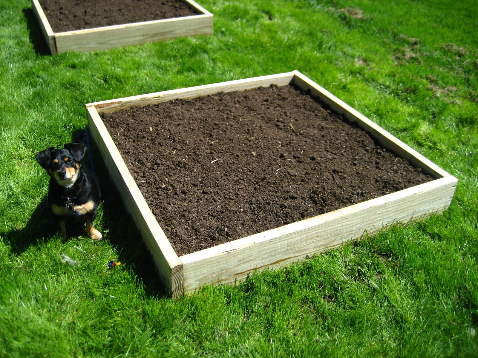 Earthworms in your garden