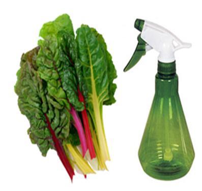 Rhubarb Spray