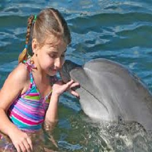 Places to Swim With Dolphins in Dubai