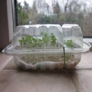 How to make a mini greenhouse - Como construir un invernadero ...