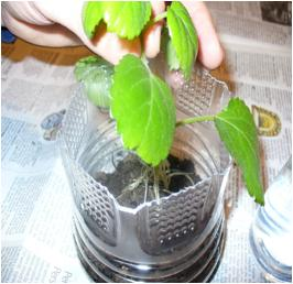 Build a Mini Greenhouse