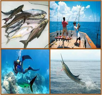 Deep Water Fishing Trips in Dubai UAE