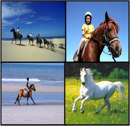 Horse Riding Adventures in Dubai Overview