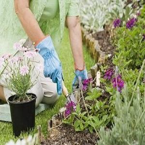 article-new_ehow_images_a07_ju_hc_way-edge-garden-yard-800x800