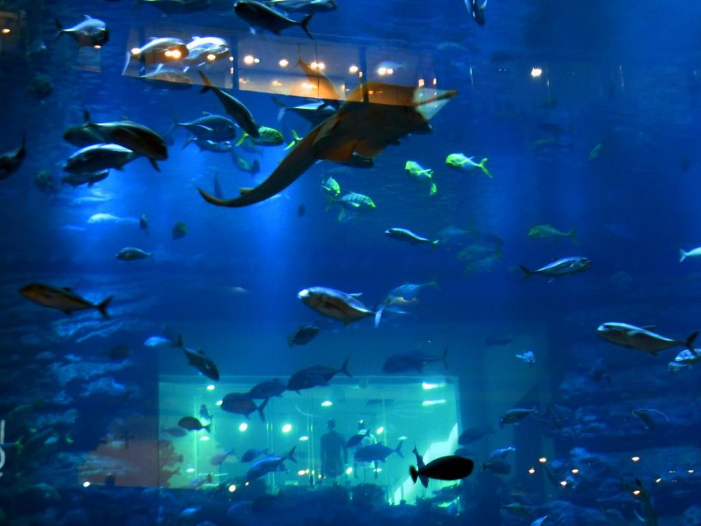 Dubai Aquarium and Underwater Zoo Overview