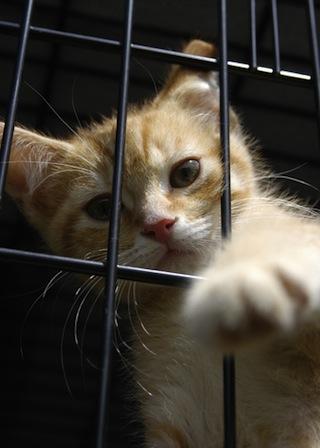 Cat at Petsmart