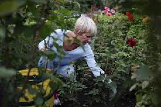 Care for a Neighbor's Garden