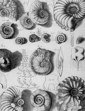 Fossils of Plaster