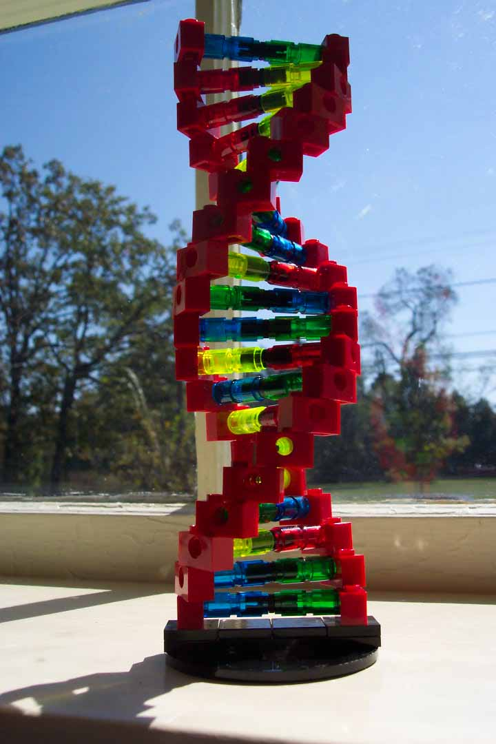 How To Make A Dna Model At Home