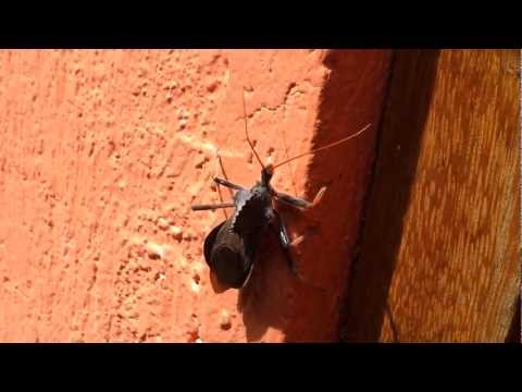 How To Survive A Locust Attack