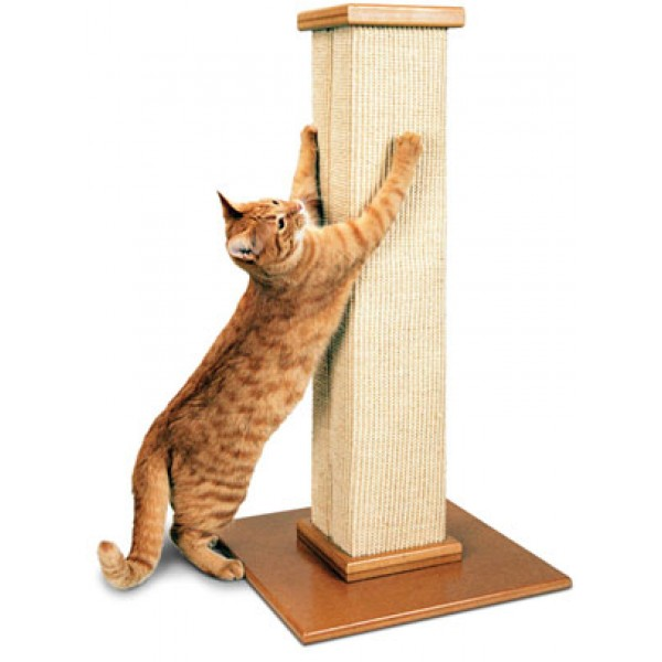 How To Train A Cat Not To Scratch Furniture