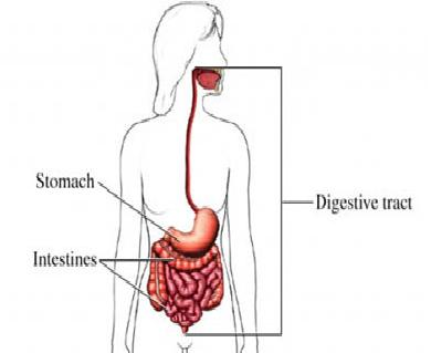 Symptoms of Stomach Flu in Adults