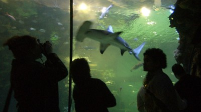 Visit the Shark Reef at Mandalay Bay Hotel and Casino on the Las Vegas Strip anytime during its normal operating hours to see 14 different exhibits devoted to dangerous aquatic predators. There are more than sharks at Mandalay Bay — and 30 of them appear in the aquarium's largest exhibit, the million-gallon Shipwreck/5(82).