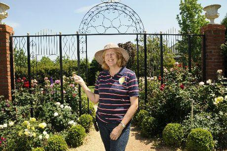 Buy Flowers for Your Garden