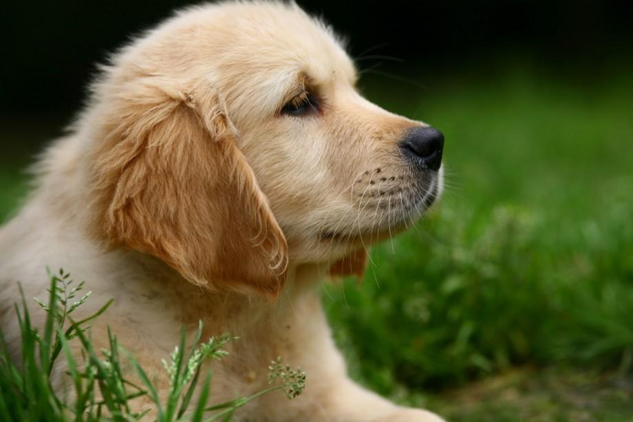 A Clean Dog