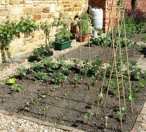 Vegetable Gardening at Home