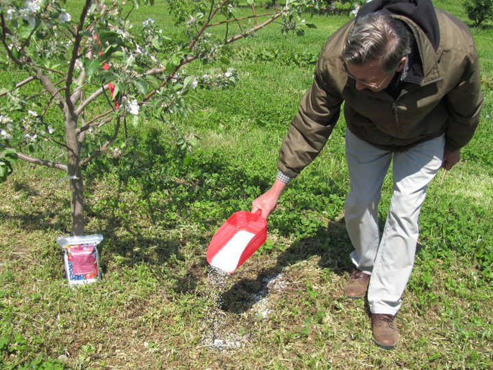 How to Fertilize Fruit Trees Properly